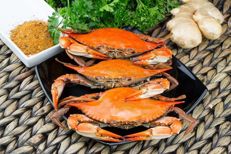 Cangrejos cocidos al vapor con las especias Festival del cangrejo y de la cerveza Cangrejos azules de Maryland foto de archivo libre de regalías