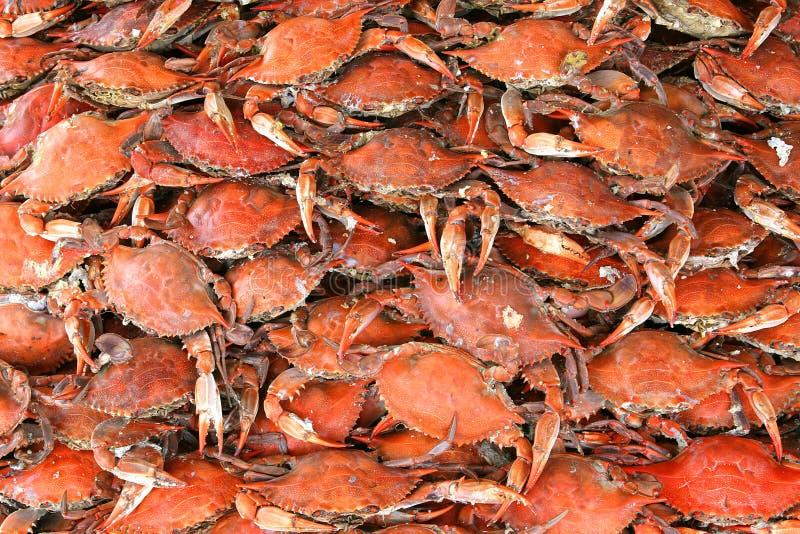 Cangrejos cocinados foto de archivo libre de regalías