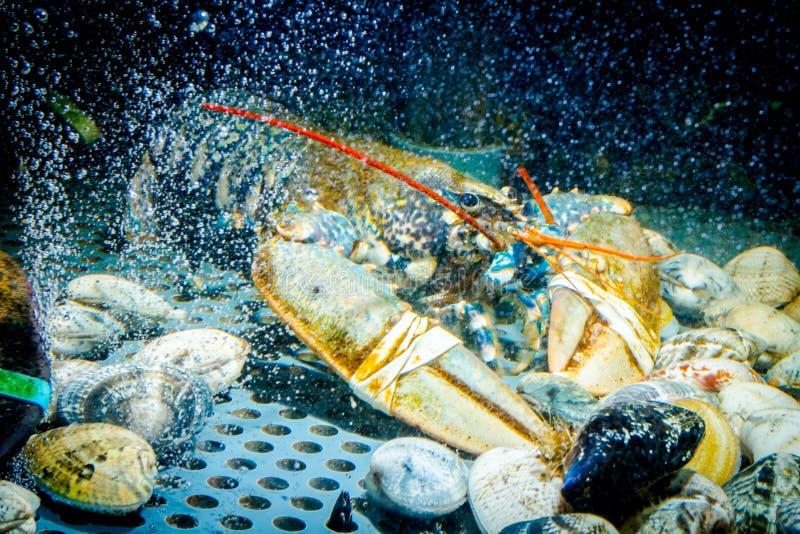 Cangrejos coloridos en venta, crustáceos del mar dentro del acuario en un restaurante foto de archivo libre de regalías