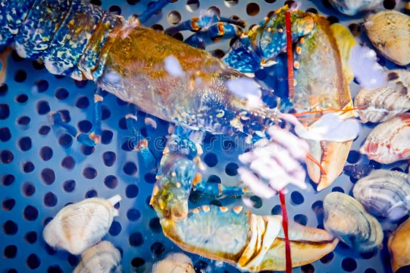 Cangrejos coloridos en venta, crustáceos del mar dentro del acuario en un restaurante imagen de archivo libre de regalías