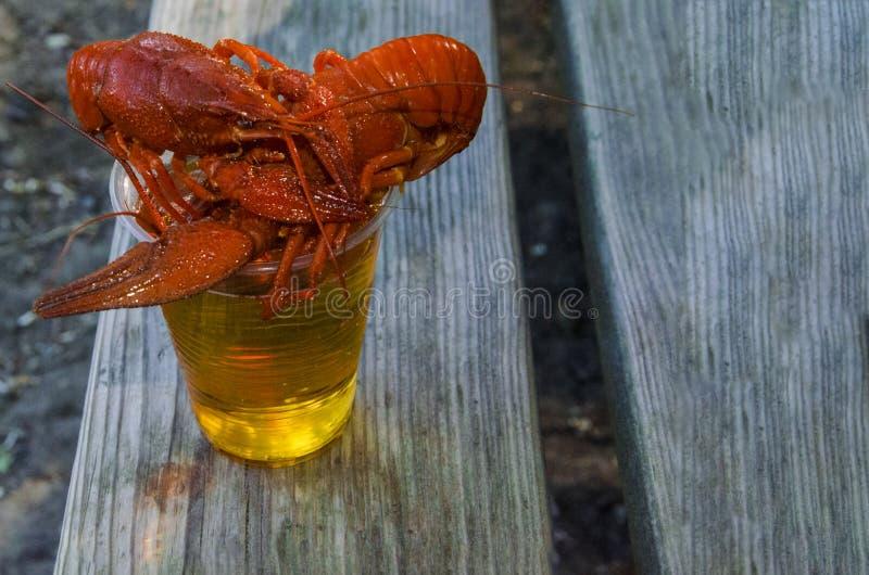 Cangrejos preparados hervidos con eneldo y el vidrio de cerveza imagenes de archivo