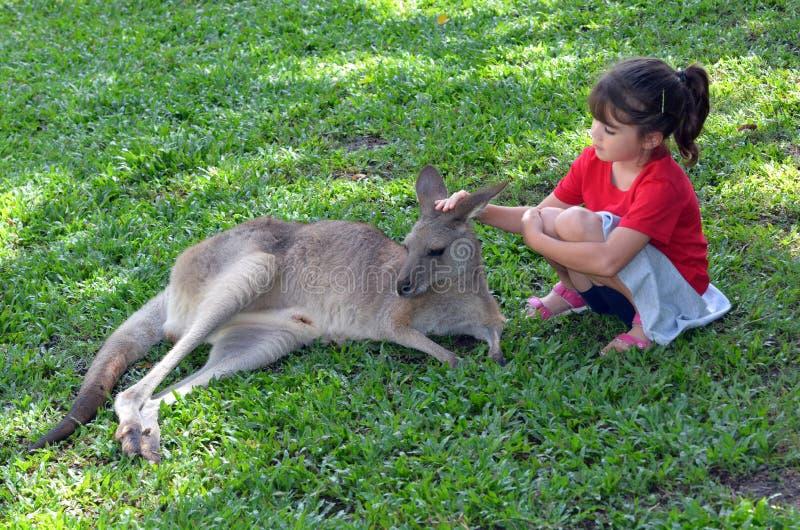 Canguru cinzento das trocas de carícias da criança pequena em Queensland, Austrália imagem de stock
