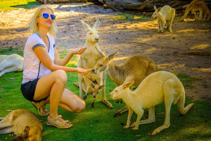 Canguru com joey imagem de stock royalty free