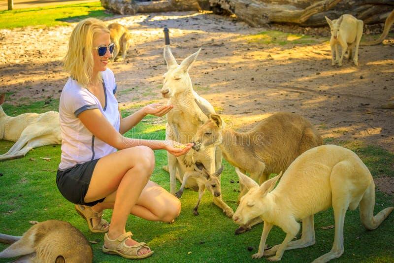 Canguru com joey imagens de stock royalty free