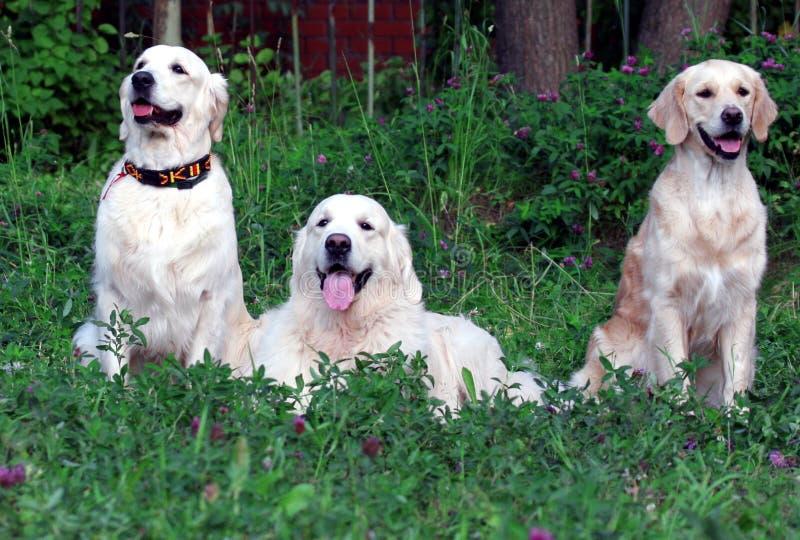 Download Cani fotografia stock. Immagine di azione, giù, scheda - 214368