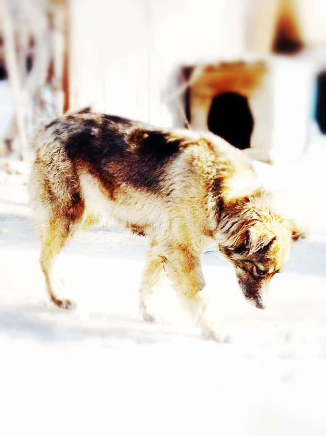 Cani immagine stock libera da diritti