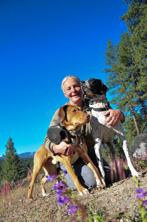 Cani ambulanti fotografia stock libera da diritti