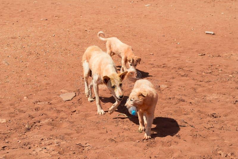 Cani che giocano con i rifiuti fotografia stock libera da diritti