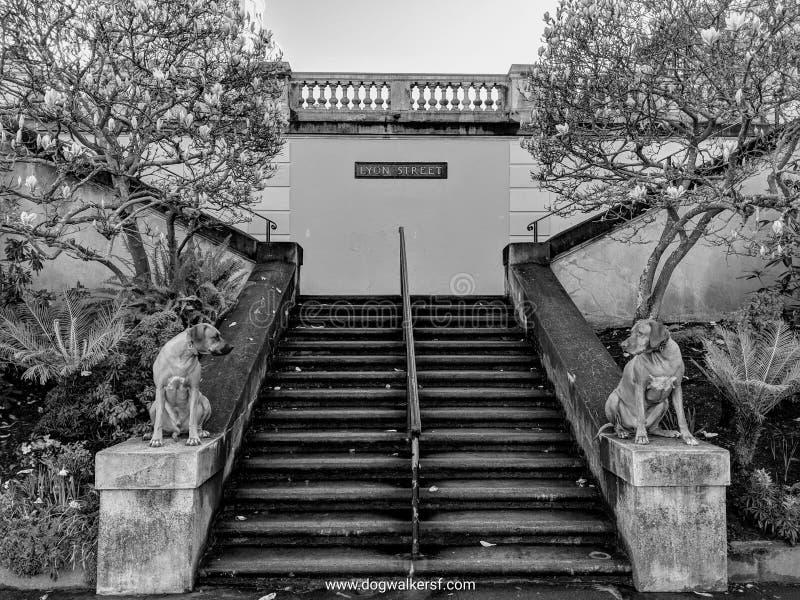 Cani che posano come statue di pietra del guardiano davanti alla scala ed alberi e piante di fioritura della magnolia immagini stock libere da diritti