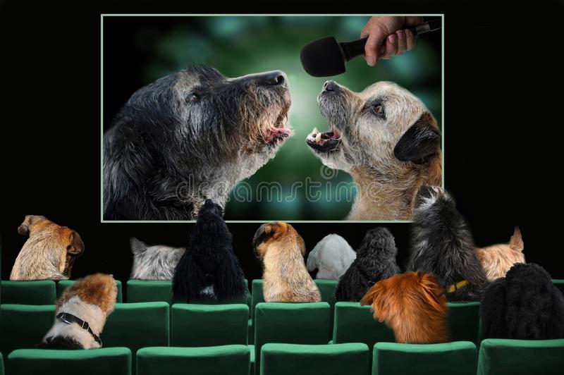 Cani in cinema che guarda un film di musica immagini stock