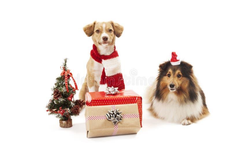 Cani con i presente immagini stock