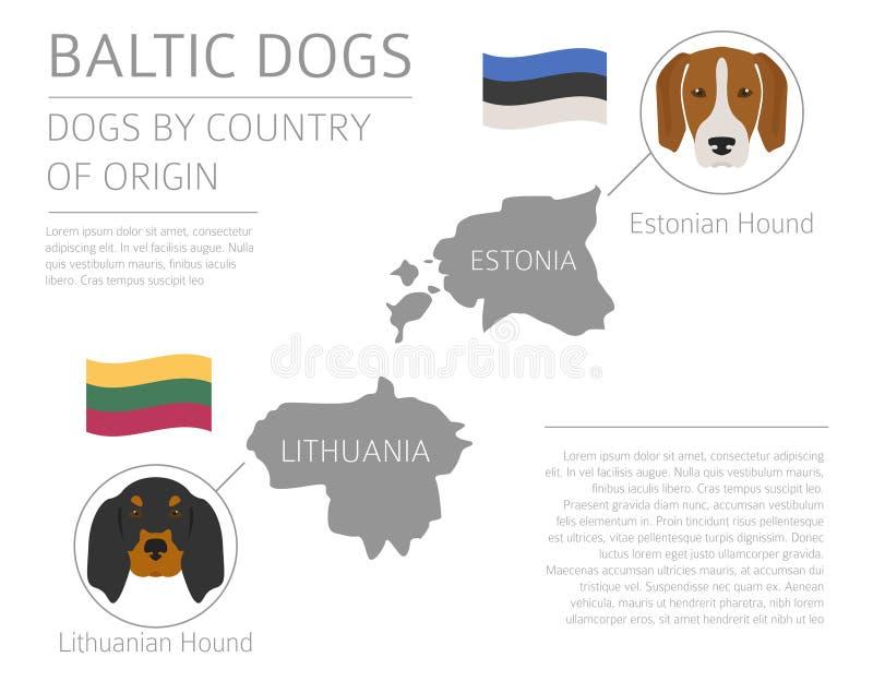 Cani da pæse d'origine Razze baltiche del cane Templa di Infographic illustrazione di stock