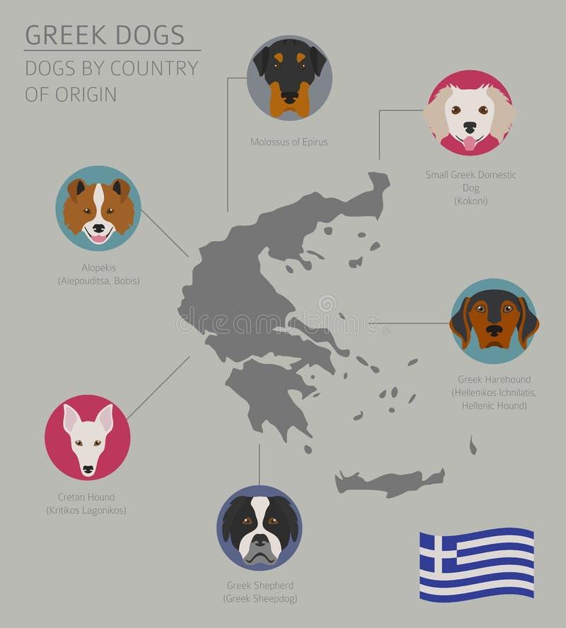 Cani da pæse d'origine Razze greche del cane Templat di Infographic illustrazione vettoriale
