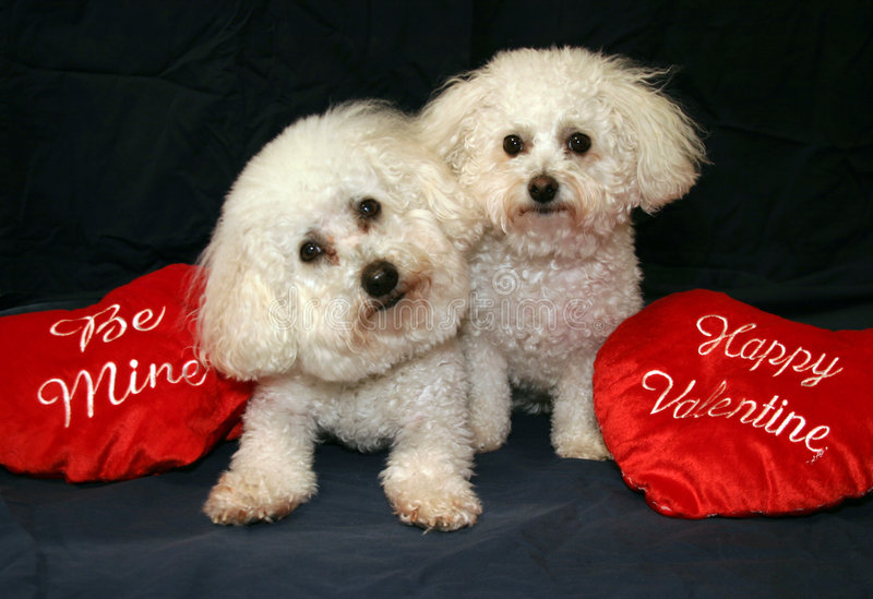 Cani del biglietto di S. Valentino fotografia stock libera da diritti