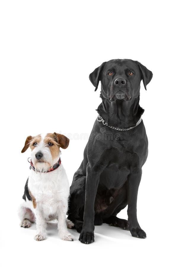 Cani di animale domestico fotografia stock libera da diritti