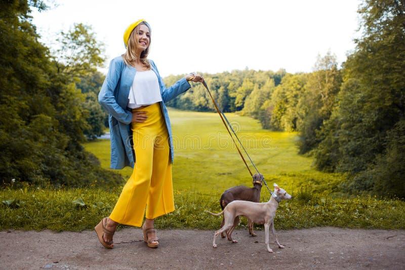 Cani di camminata, cura di animale domestico Levriero italiano della razza del cane fotografie stock
