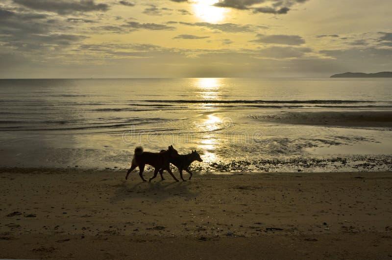 Cani di camminata delle coppie sulla spiaggia di mattina fotografia stock