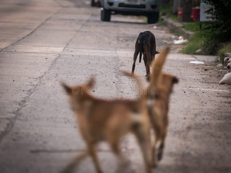 Cani di randagi sulla strada fotografia stock