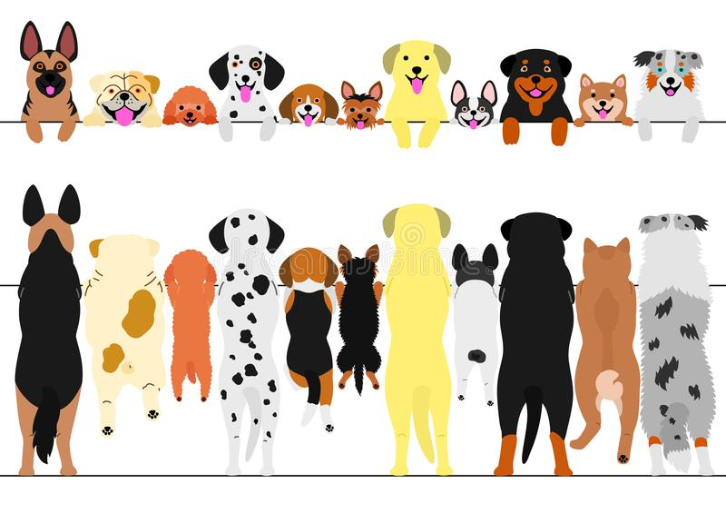 Cani diritti anteriori ed insieme posteriore del confine illustrazione vettoriale