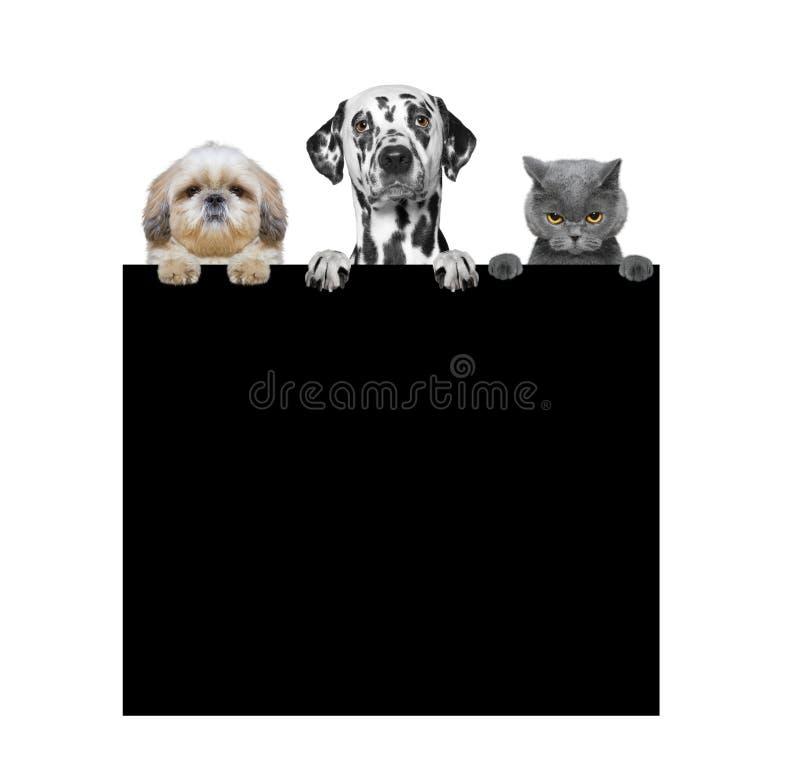 Cani e gatto che tengono una struttura in loro zampe fotografia stock