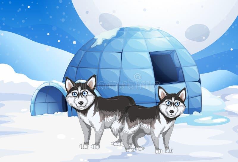 Cani ed iglù di Syberian royalty illustrazione gratis