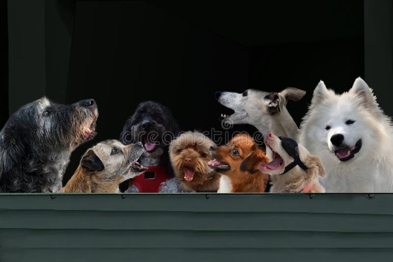 Cani entusiasta di canto immagine stock