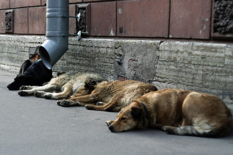 Cani esterni immagine stock libera da diritti