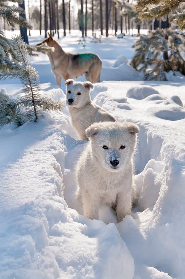 Cani esterni fotografia stock libera da diritti