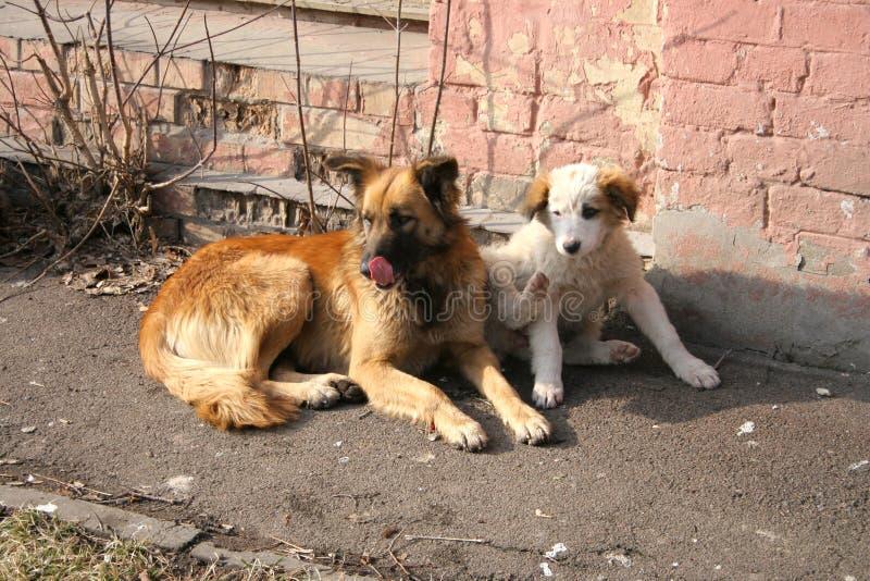 Cani esterni fotografia stock
