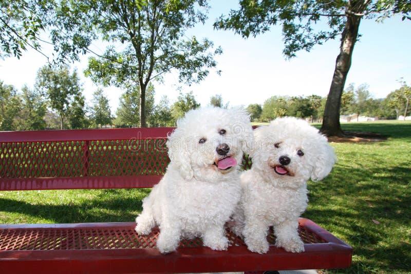 Cani felici immagine stock