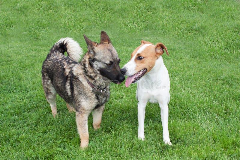 Cani felici immagini stock