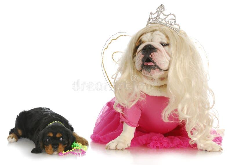 Cani femminili immagini stock libere da diritti