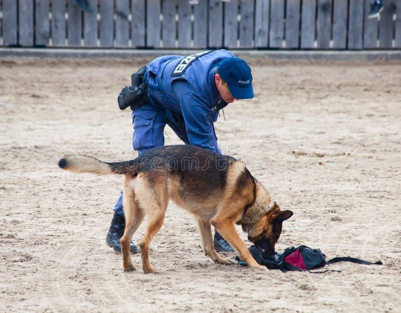 Cani poliziotti sul lavoro immagine stock libera da diritti