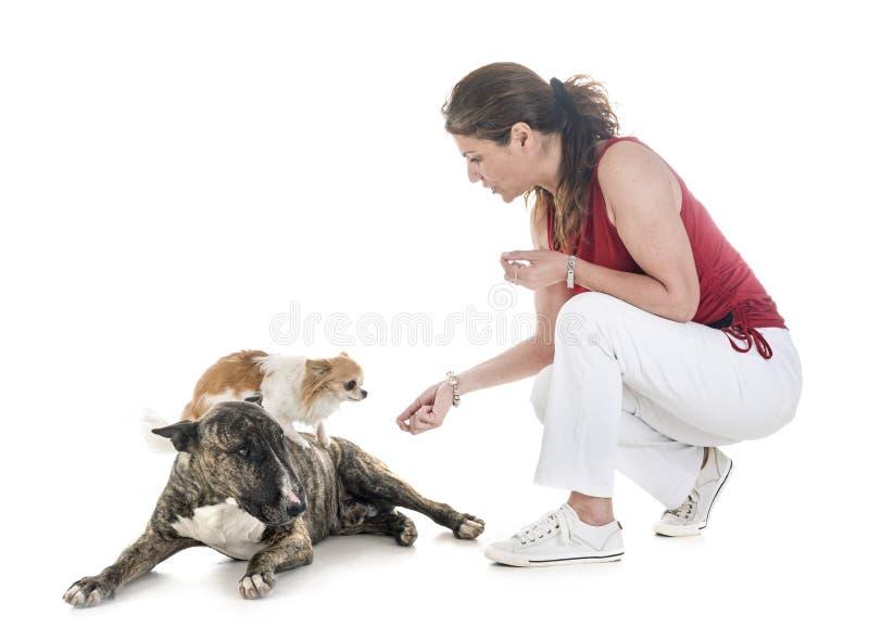 Cani, proprietario ed obbedienza fotografia stock libera da diritti