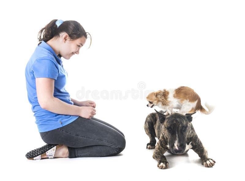 Cani, proprietario ed obbedienza immagini stock