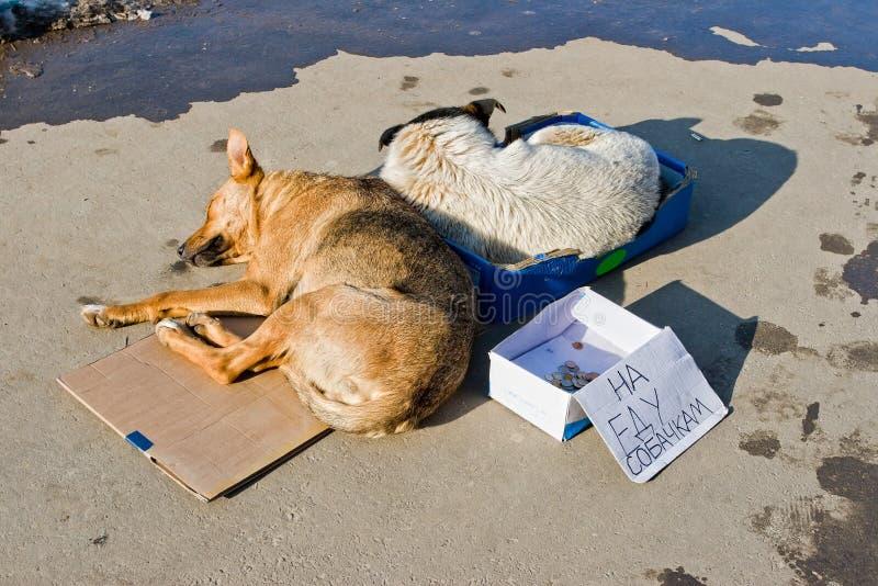 Cani randagi che dormono sulla terra immagine stock libera da diritti