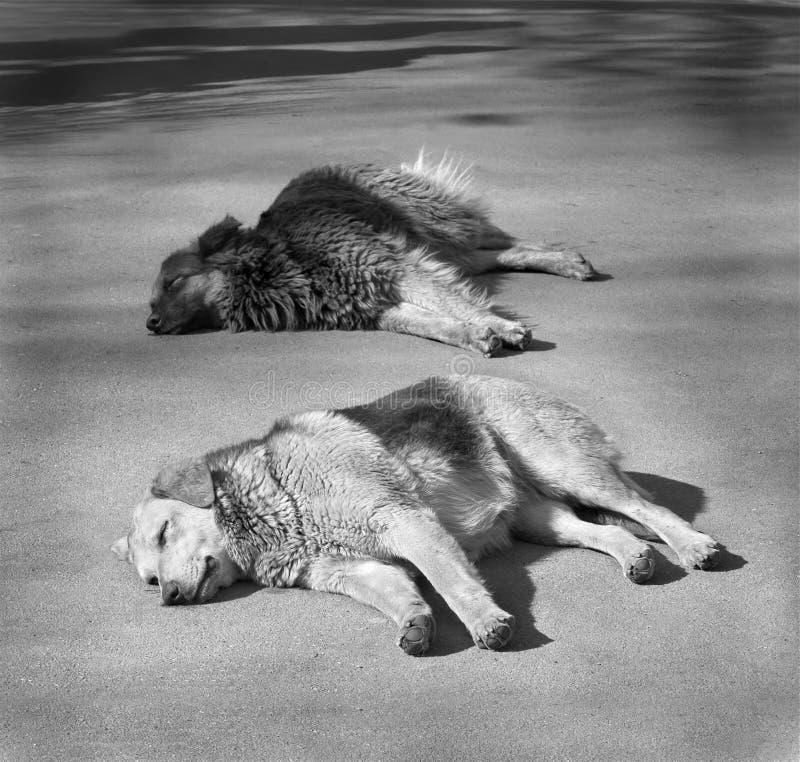 Cani senza casa immagini stock