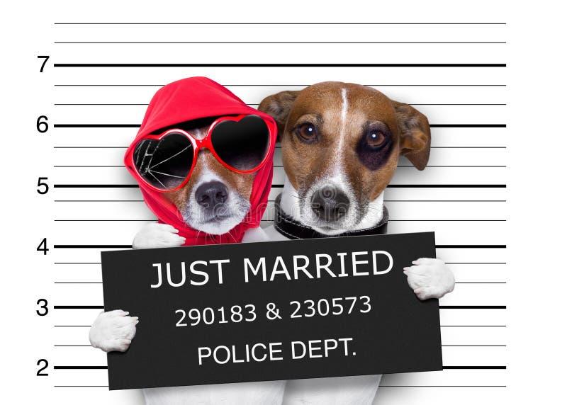 Cani sposati del Mugshot appena fotografie stock