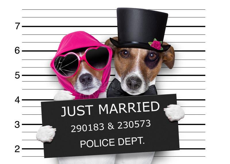 Cani sposati del Mugshot appena immagini stock