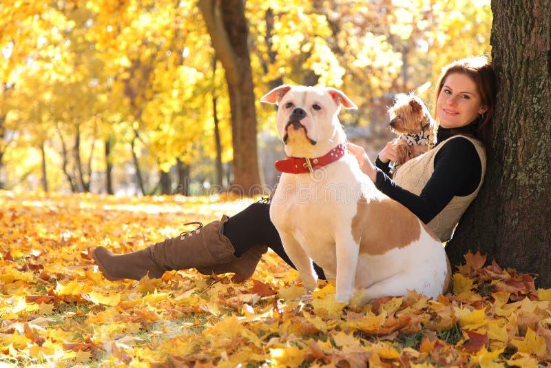 Cani su giallo immagini stock