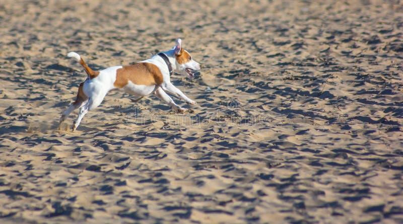 Cani sulla spiaggia con il proprietario, sempre più sono spiagge che acconsentono a portare ai loro 4 l'amico fornito di gambe ci fotografia stock