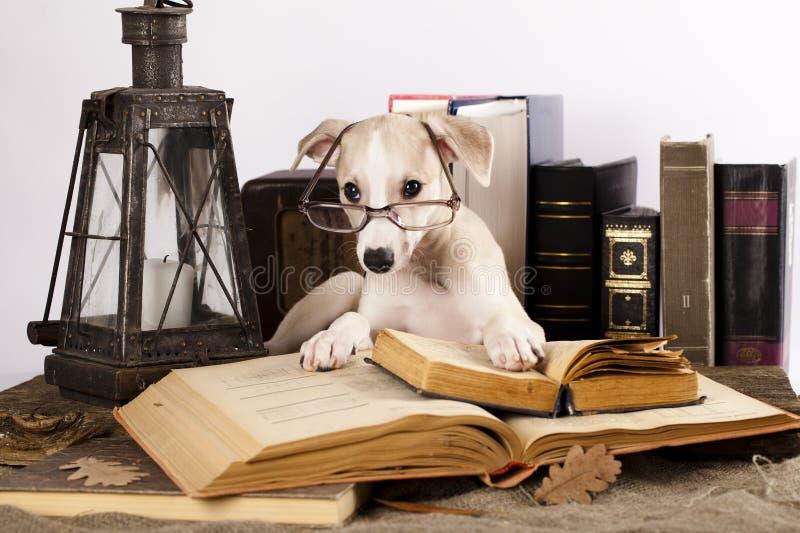 Cani in vetri con i libri fotografie stock libere da diritti