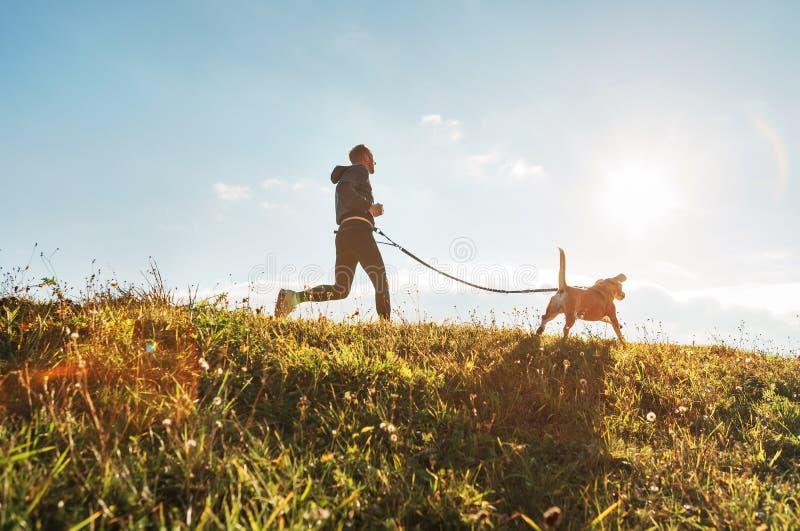 Canicross övningar Mankörningar med hans beaglehund på den soliga morgonen royaltyfria foton