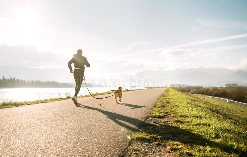 Canicross exercises. Outdoor sport activity - man jogging with his beagle dog royalty free stock photo