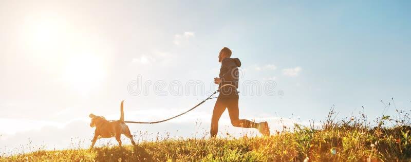 Canicross ?vningar Mank?rningar med hans beaglehund p? den soliga morgonen fotografering för bildbyråer