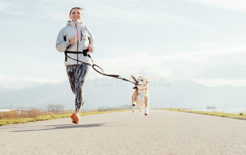 Canicrossoefeningen Vrouwelijke looppas met zijn brakhond en het gelukkige glimlachen Openlucht de sportactiviteit van de de herf royalty-vrije stock fotografie