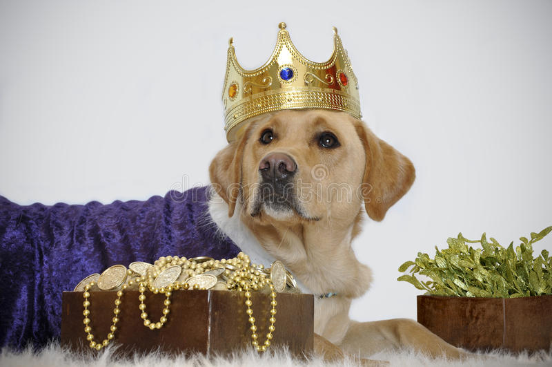 Canine gold crown