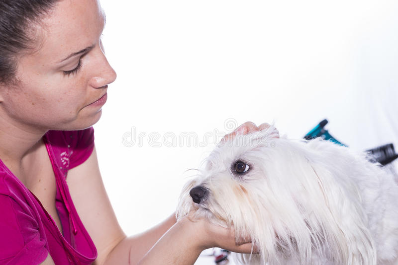 Canine hair cut. royalty free stock images