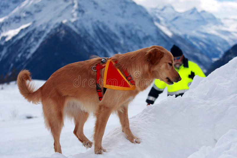 Download Canine unit editorial image. Image of help, person, winter - 18611460