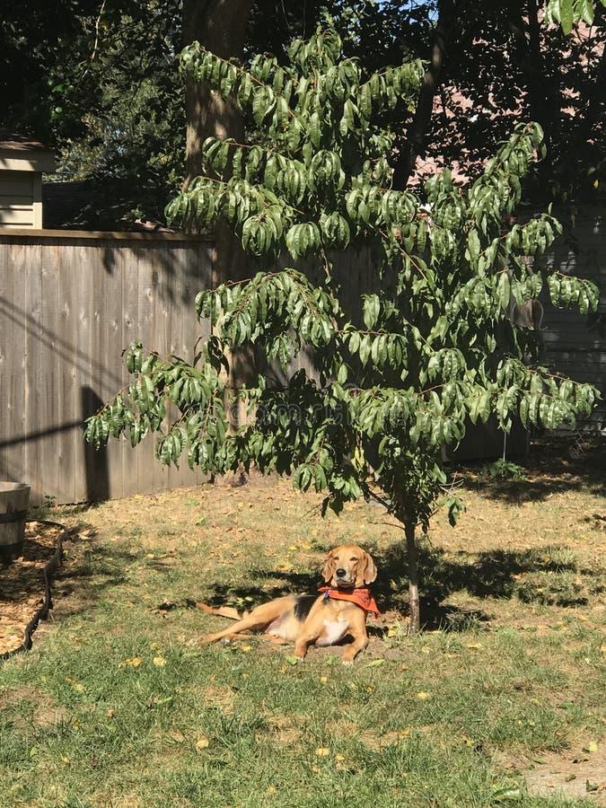 Canino no sol fotos de stock